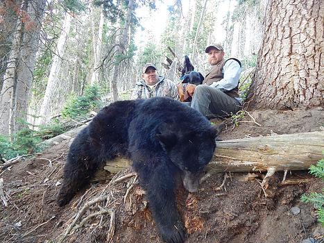 Utah bear hunts