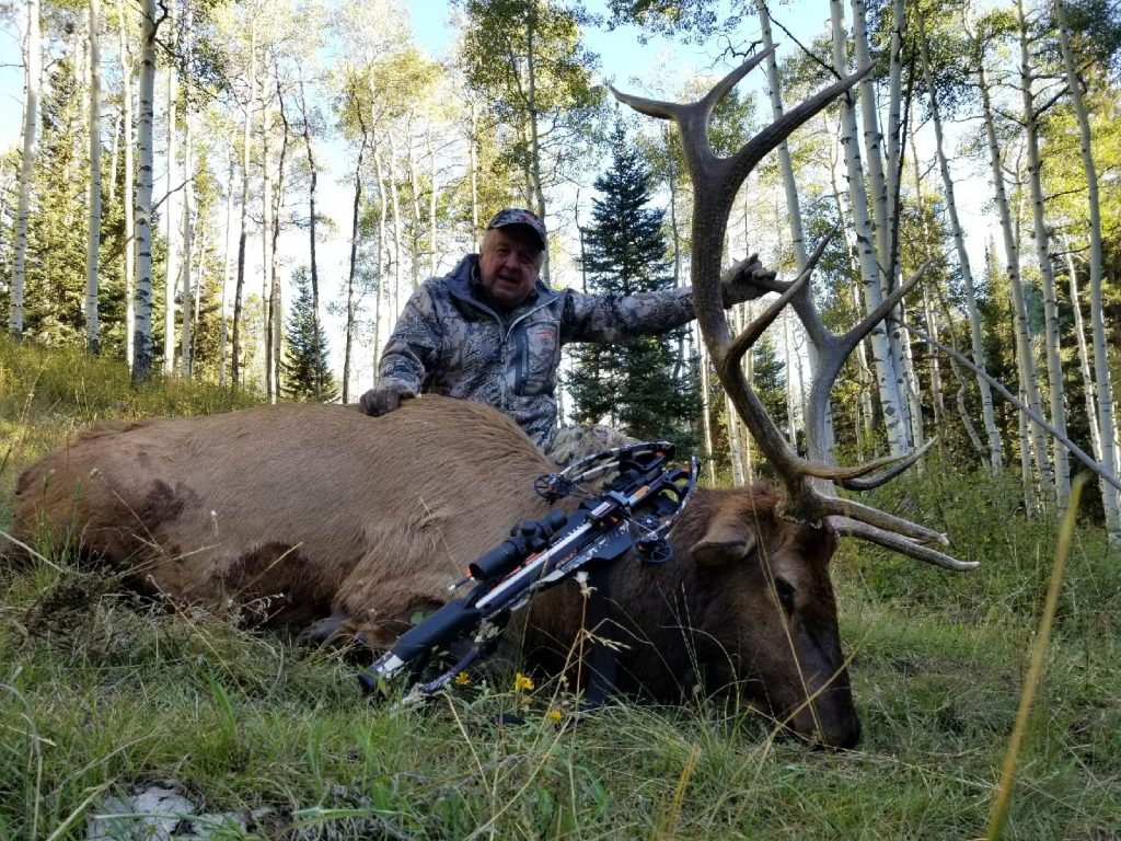 bull elk taken during archery season in Colorado unit 61 with Allout Outfitters