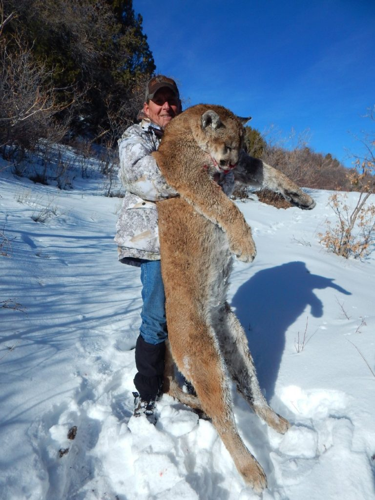 Winter Cougar hunt