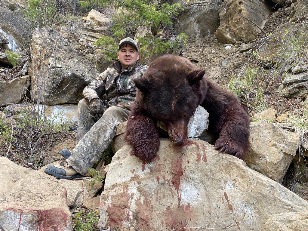 Utah Bookcliffs bear